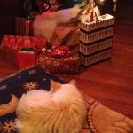 Lily at Christmas, 2012