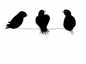 three black birds